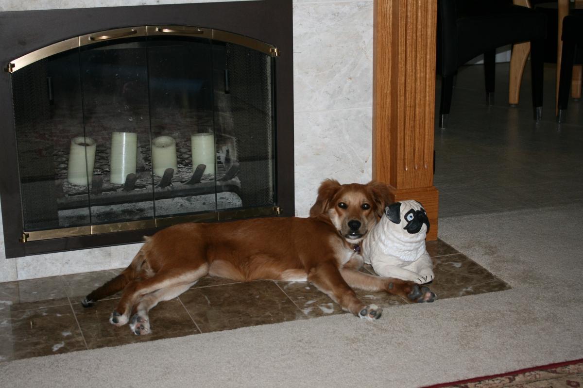 Lazy dog day